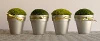 Little Pots of Moss