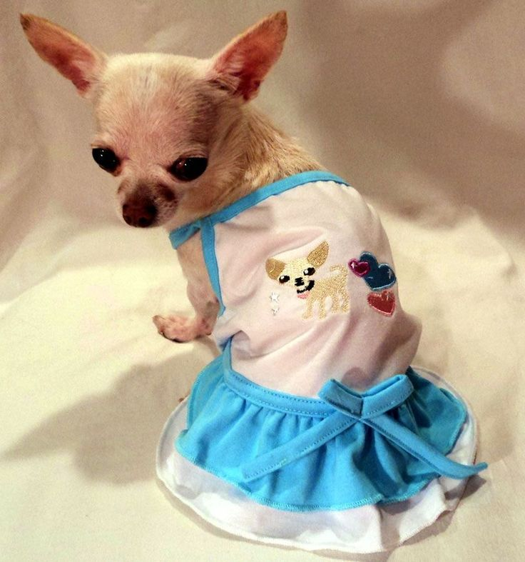 Chihuahua princess dress small dog clothes pinterest - Dog clothes for chihuahuas ...