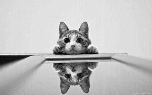 cat! #cat