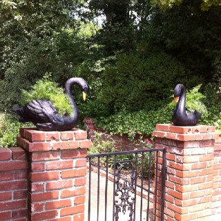 Pin by michele h on swan swoontime pinterest - Concrete swan planter ...