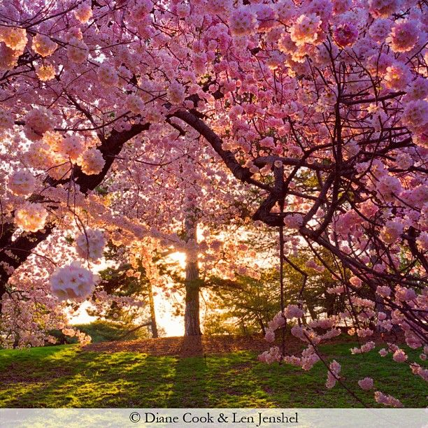 Bronx Botanical Garden Favorite Places Spaces Pinterest