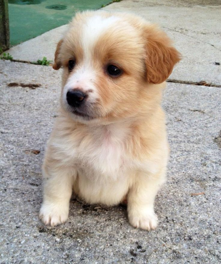 New puppy is sad? | So... Very... Cute | Pinterest