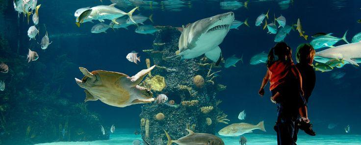 Newport Aquarium Kentucky