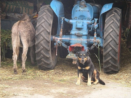 A tractor, a dog and the backside of a donkey...