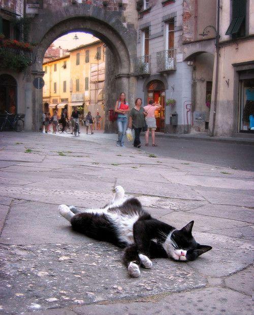 Cats sleep funny   Napping Cat - Lucca, Italy. http://kittyflix.com
