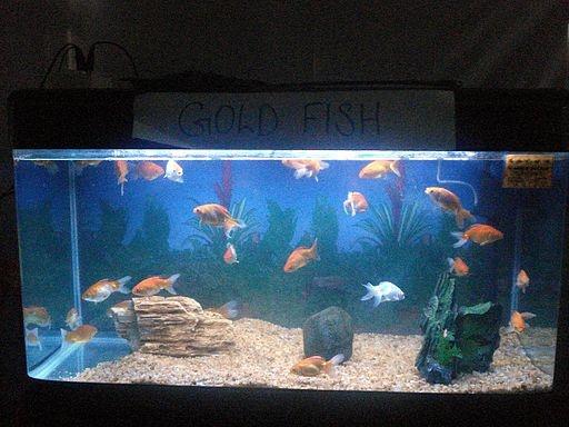 Fish Tank Equipment List : Of Aquarium Accessories For Your Fish Tank?A list of aquarium ...