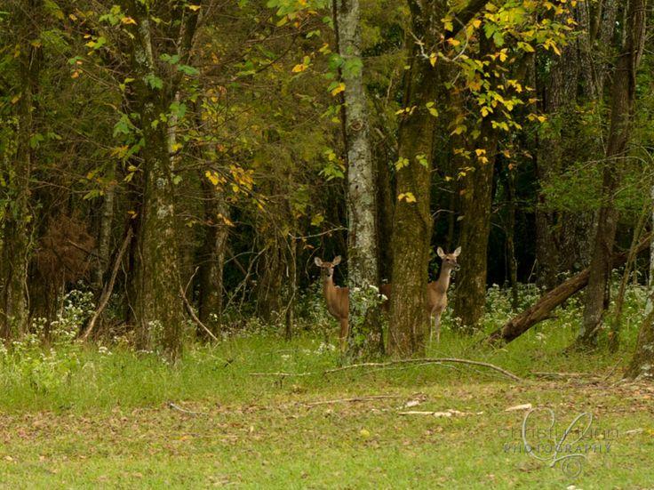 photo fete des lumieres 2012 Grcs