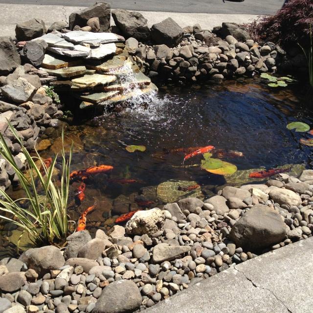 Koi Pond Garden Fish Ponds Pinterest