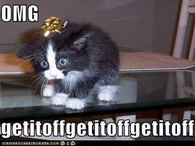 Lol lol lol I love cat humor