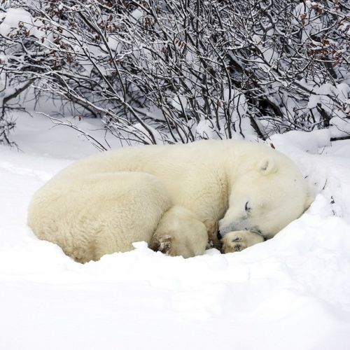 hibernation | animals | Pinterest
