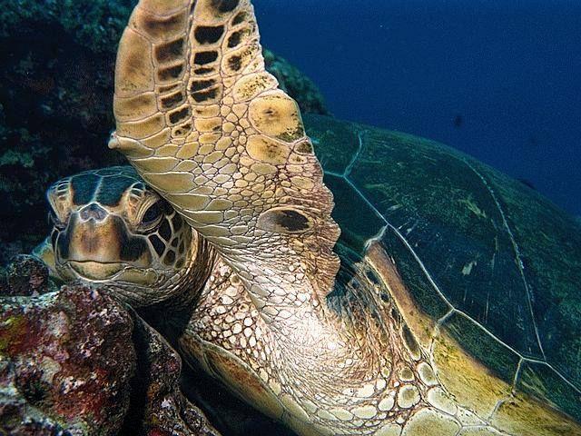 Oh, hi yah! #seaturtles #sea #turtles #animals #water #ocean #care