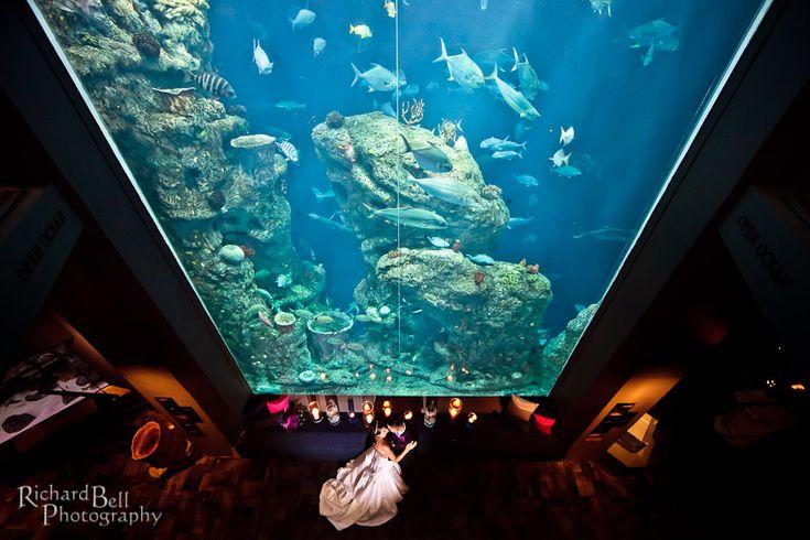 South Carolina Aquarium Charleston Sc South Carolina