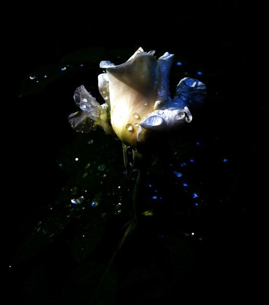 Blooming flower at night flowers at night pinterest for A flower that only blooms at night