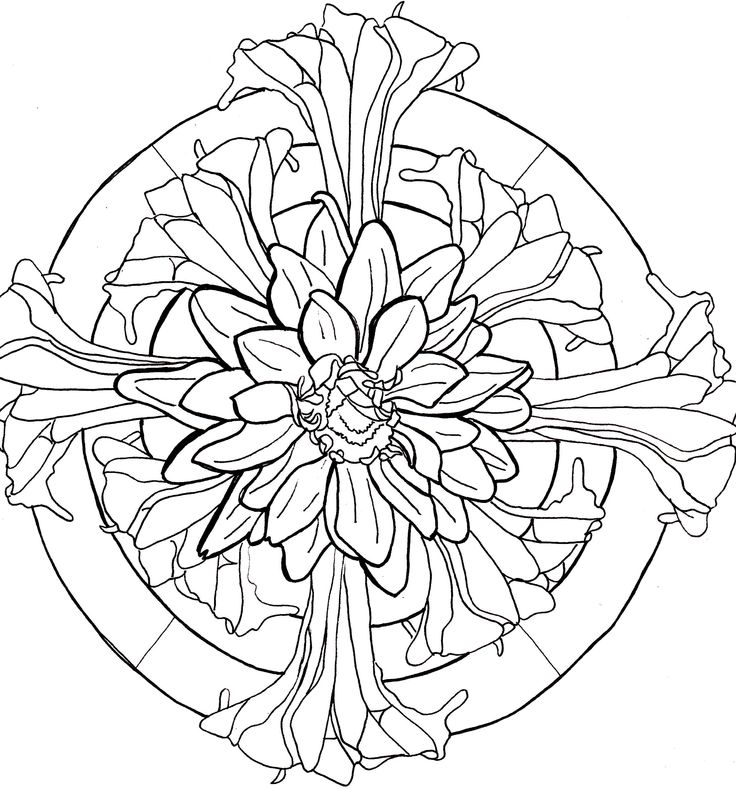 Dahlia Flower Line Drawing : Line drawing flowers dahlia lilies drawings