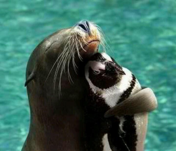Seal hugging a Penguin...