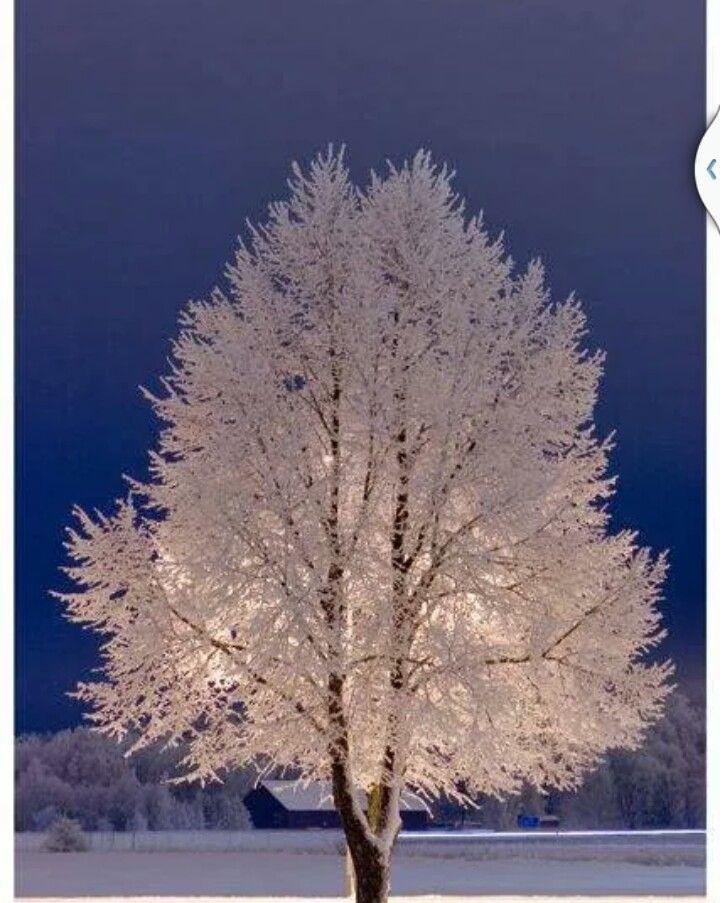 Winter Angel Tree | Books Worth Reading | Pinterest
