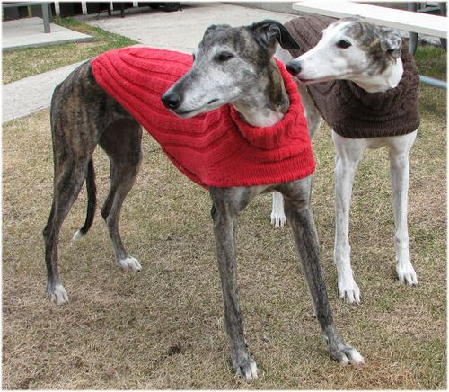Knitting Patterns For Greyhound Sweaters : Side Button Greyhound Sweater