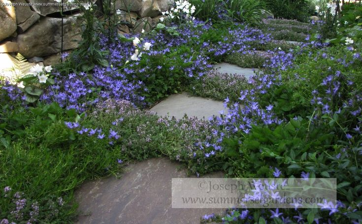 Colors Again Low Ground Cover Backyard Plant Ideas