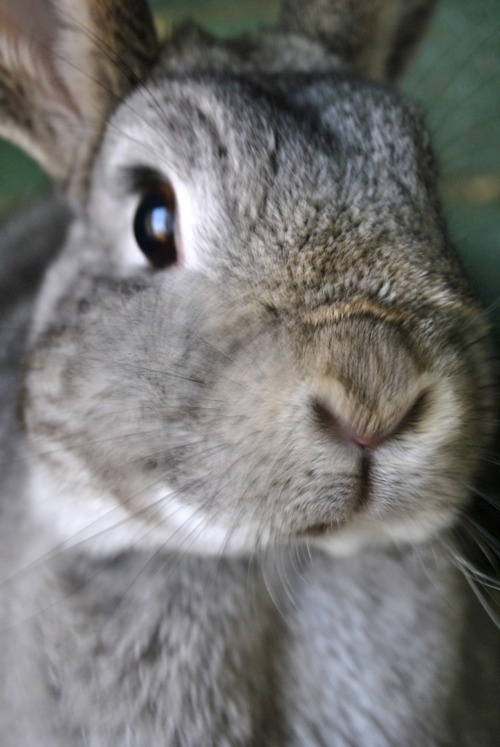 Bunny's nose moves too quickly for the camera - June 5, 2012