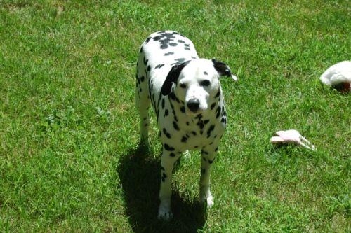 Dog Friendly Backyard Ground Cover : Backyards