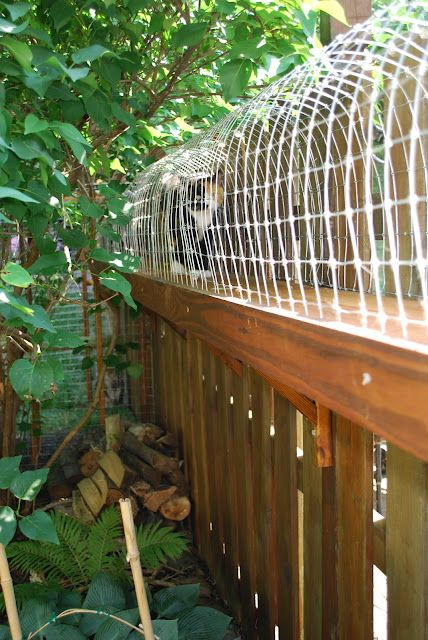 Outdoor cat run for indoor cats