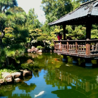 Japanese Tea Garden Hayward Ca Places I Have Been