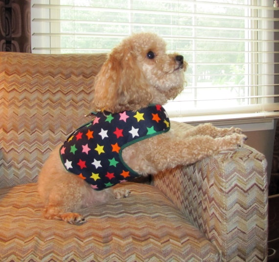 Lucky Stars  Custom Made  Cotton Dog Harness by playfulpup on Etsy