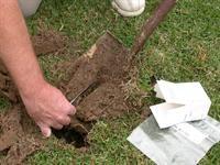 Should new sod be fertilized? Many wonder if newly laid sod should be