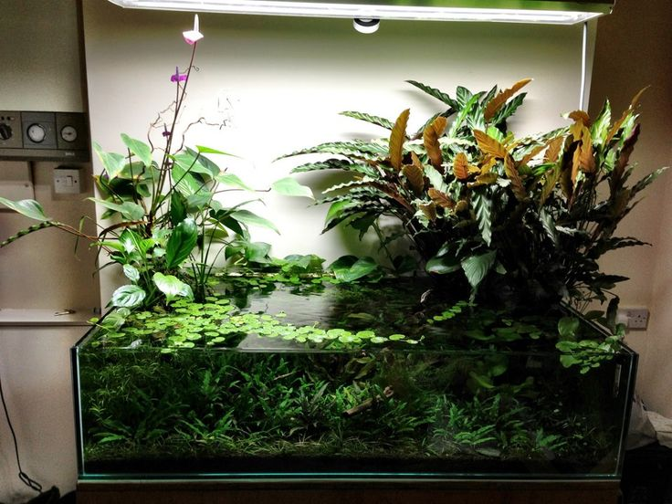 How to get plants growing out the top 164801 for Growing plants with fish
