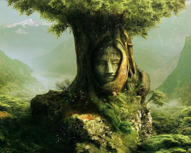 the secret life of trees pdf
