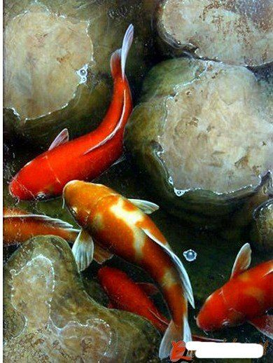 Fish oil painting koi pinterest for Watercolor fish painting