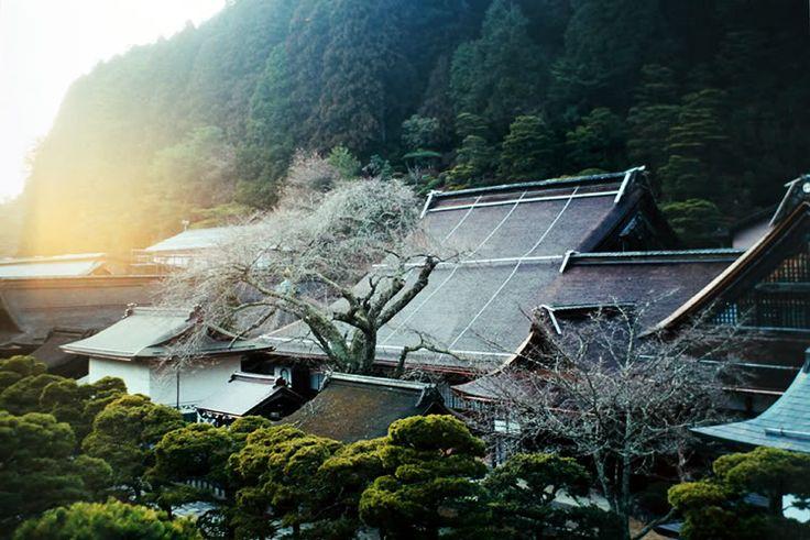 Temples on Mt. Koya, Japan.  TravelBug!  Pinterest