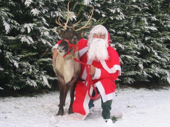 Santa s reindeer cam watch as santa comes out to feed his reindeer
