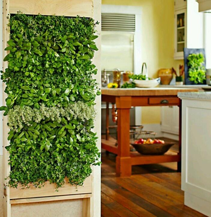 Indoor herb wall Garden Party Pinterest