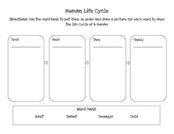 essay on human life cycle The human resource management function — the employment cycle • chapter 5 173 bupa health dialog — a top employer bupa health dialog, located in melbourne, offers evidence-based wellness, prevention and.