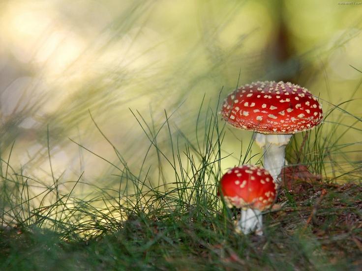 fungi, mushrooms, macro | Out of this world~ | Pinterest