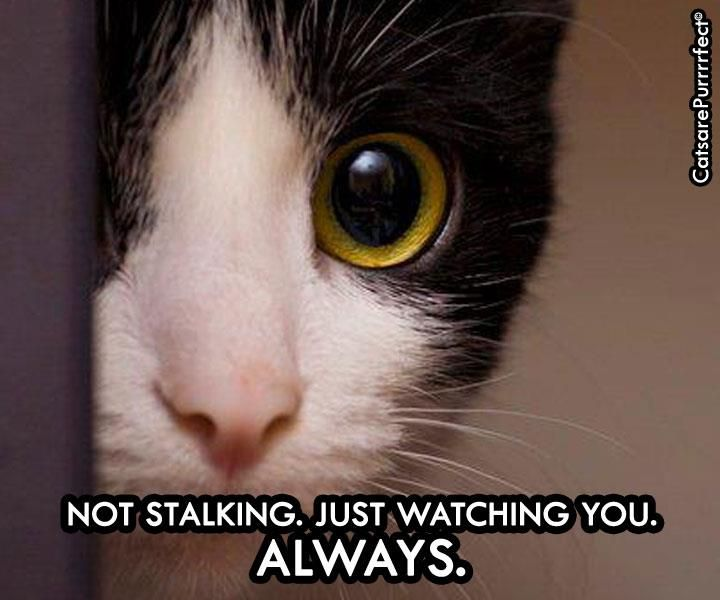 Cats ... natural born stalkers ... LOL