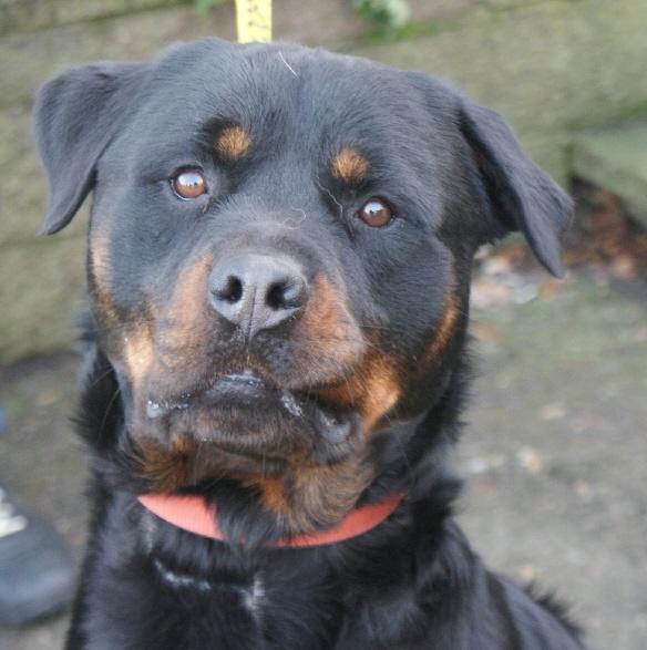 Rescue Dogs Adoption Fife