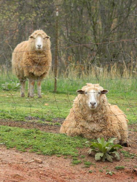 got wool? ....WE do!!!!!