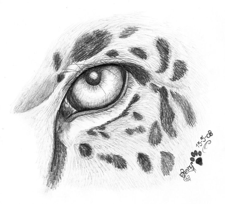 Cool animal pencil drawings