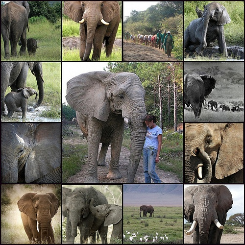 Image result for World Elephant Day