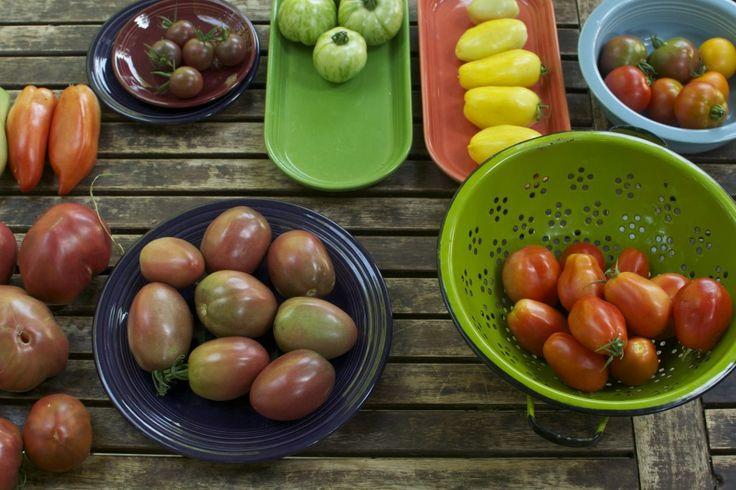How to save heirloom tomato seeds garden ideas pinterest