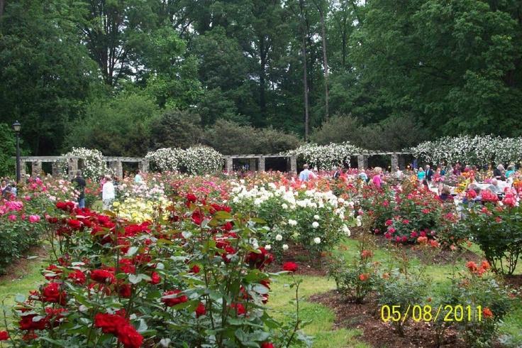 Rose Garden Raleigh Nc Raleigh Nc Pinterest