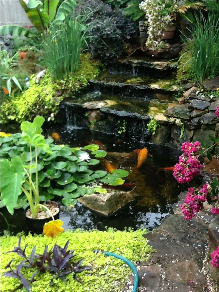 Jackie and Es Koi and goldfish pond It smells good Pinterest