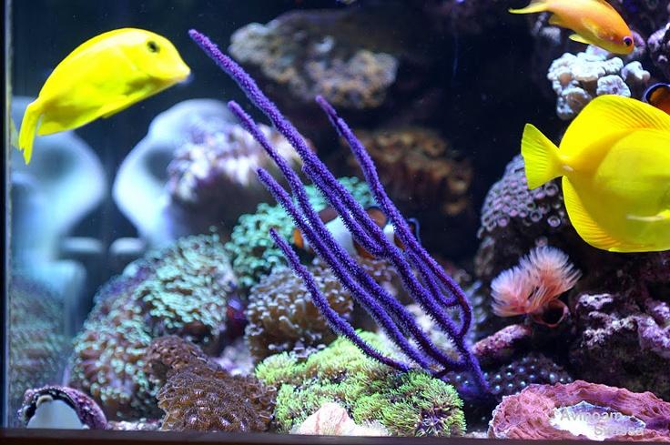 coral orphek lighting led