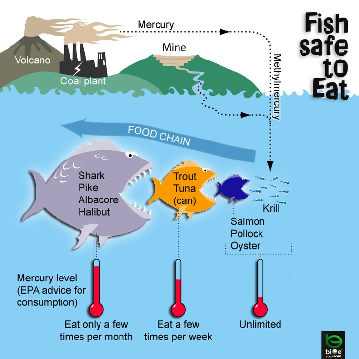 mercury in fish a better world pinterest