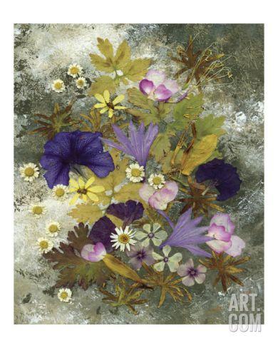 Morning Glory - Pressed Flower Art - Floral Arrangement Giclee Print ...