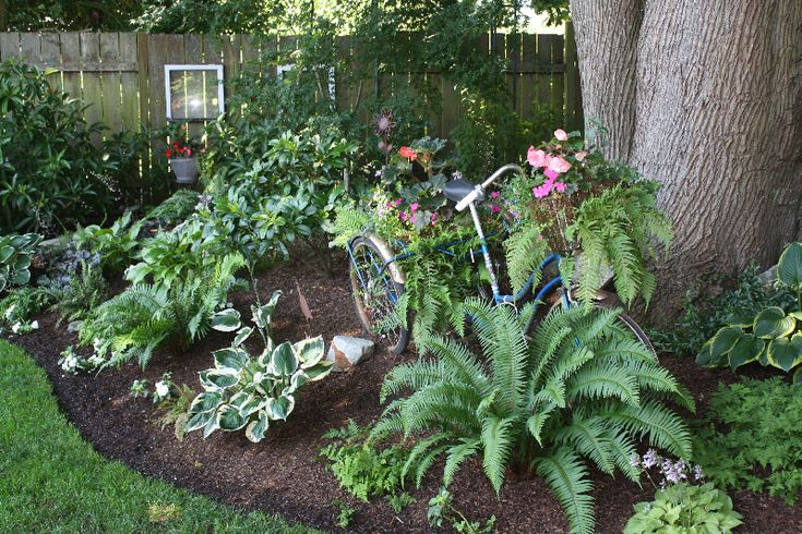 Shade Garden Ideas Garden Pinterest