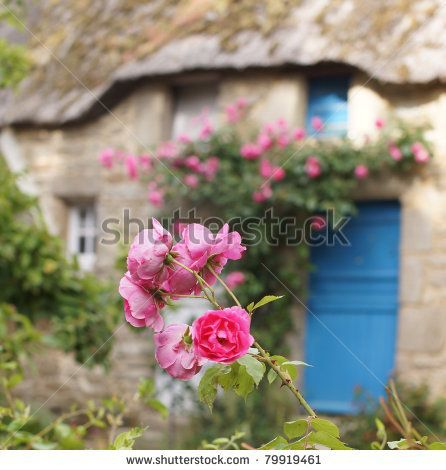 Pink roses in front of a beautiful rural cottage with tatched roof by