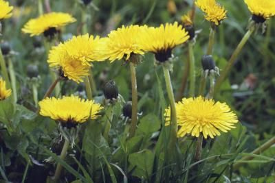 How to Kill Weeds With Home Remedies
